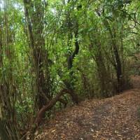 Wyjście z doliny to już zwykła droga w niezwykłej szacie roślinnej.