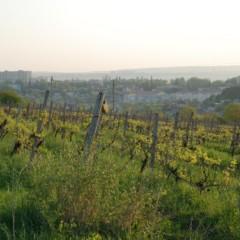 Parę kilometrów od architektonicznego gwaru szczekają psy i uprawia się winorośl. Ponadto jest tam świetny miliongwiazdkowy hotel blisko centrum (5km, 30 min jazdy, od Ambasady Polski kierować się dziurawą drogą na południowych zachód)