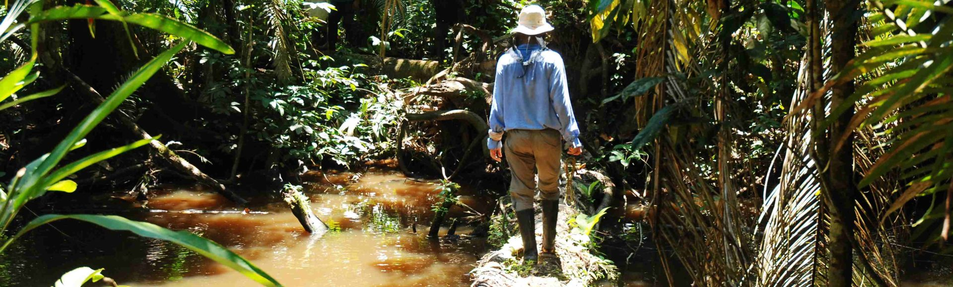 Wgłąb Dżungli Amazońskiej: PN Pacaya-Samira.