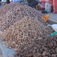 Peru ojczyzną ziemniaka, dobitnie.