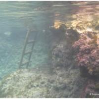 Wspaniała zatoka Mġarr ix-Xini pełna meduz.
