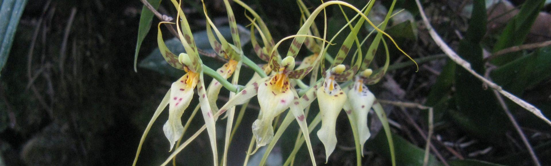 Moyobamba – co warto zobaczyć? Gorące źródła i orchidee!